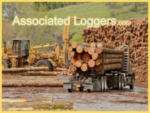 Logging Insurance Services